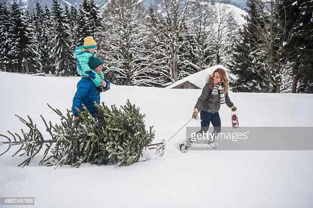 Austria, Salzburg Country, Altenmarkt-Zauchensee, Family walking in snow, carrying Christmas tree