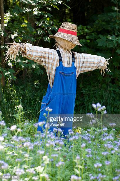 austria, salzburg country, grossgmain open air museum, scarecrow in flower meadow - scarecrow agricultural equipment stock photos and pictures