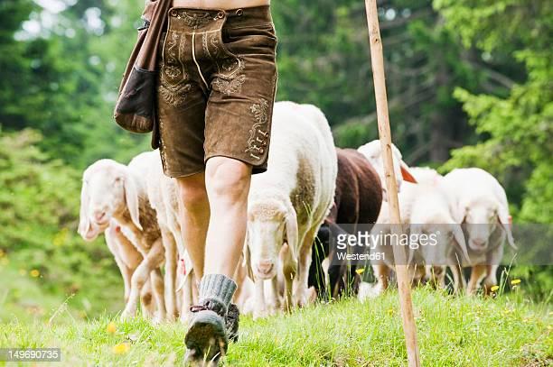austria, salzburg county, shepherd herding sheep on mountain - eden pastora fotografías e imágenes de stock