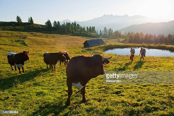 Austria, Salzburg, Couple walking through alpine meadow