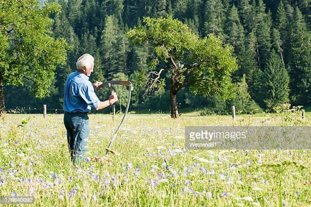 austria, salzburg, senior farmer in summer meadow - scythe stock photos and pictures