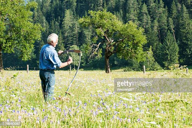 Austria, Salzburg, Senior farmer in summer meadow