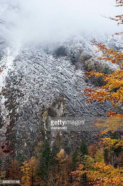 Austria, Salzburg State, Hallstatt, trees after a windfall