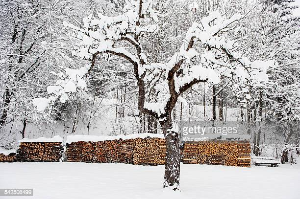 Austria, Salzburg State, Piles of wood in winter