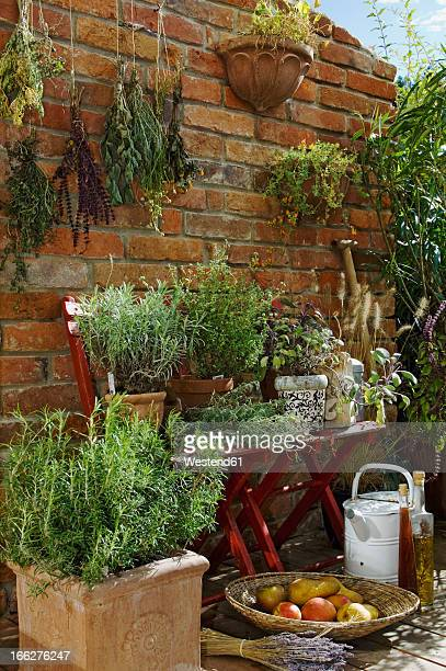 Austria, Salzburger Land, Dried herbs on brick wall, close up