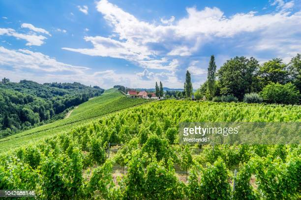 austria, styria, gamitz, wine estate and vinyards - austria stock pictures, royalty-free photos & images