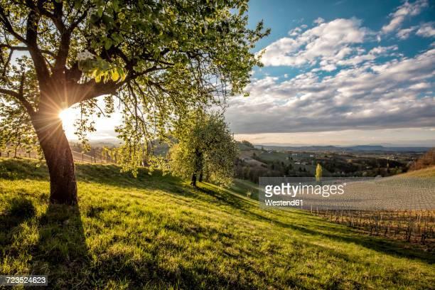 Austria, Styria, Ratsch an der Weinstrasse, vineyard