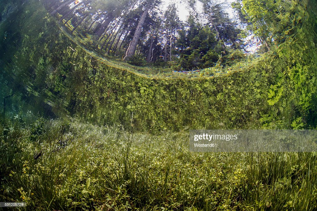 Austria, Styria, Tragoess, Upward view under water at the Green Lake : Stock Photo