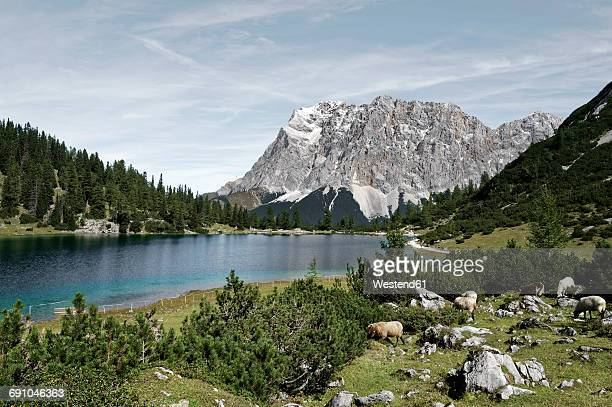 Austria, Tyrol, Ehrwald, Seebensee with Zugspitze in the background