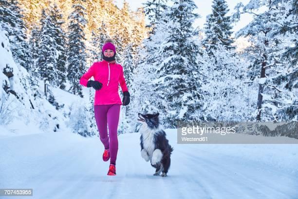 austria, tyrol, karwendel, riss valley, woman jogging with dog in winter forest - winter sport stock-fotos und bilder