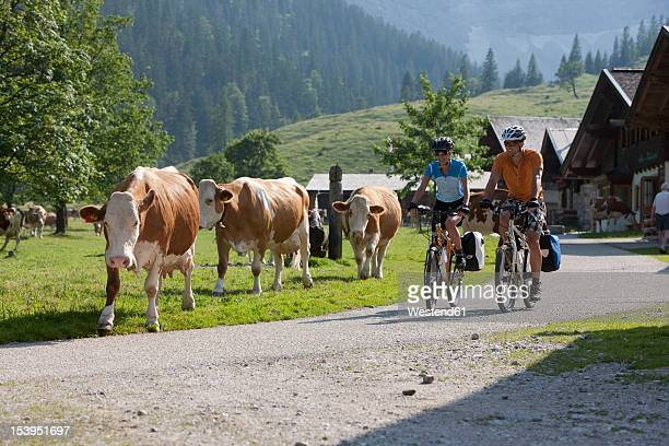 austria, tyrol, man and woman cycling through road - austria stock pictures, royalty-free photos & images