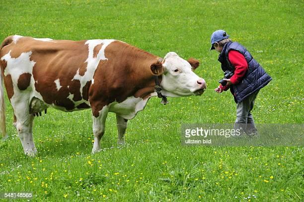 Austria Tyrol Mayrhofen boy and cow