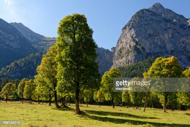 Austria, Tyrol, trees in front of Karwendel Mountains in autumn
