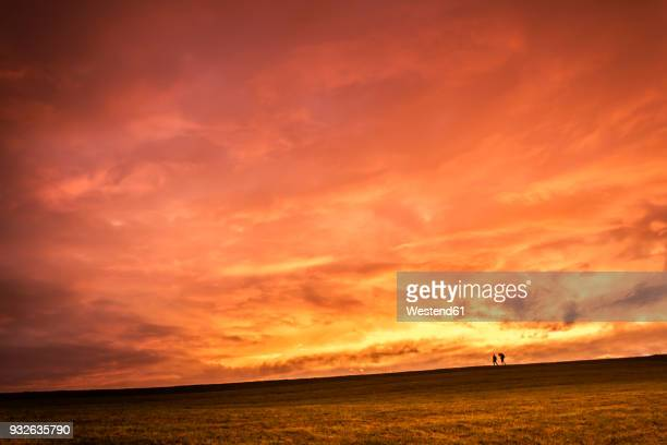 austria, upper austria, walker on meadow at sunset - meadow walker stock pictures, royalty-free photos & images