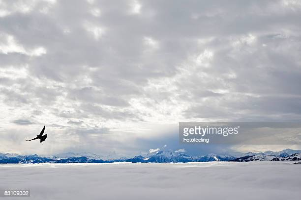 Austria, Werfen, silhouette of eagle in flight over snow covered landscape