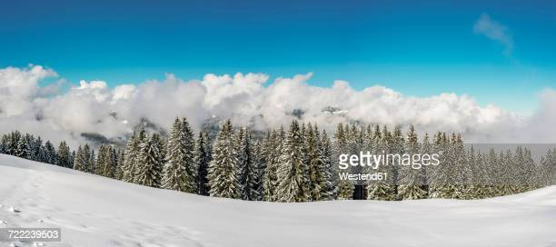 austria,vorarlberg, kleinwalsertal, high route in winter - フォアアールベルク州 ストックフォトと画像