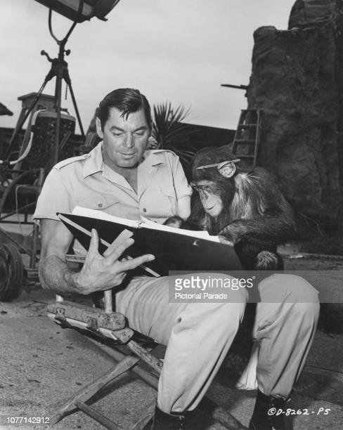 AustroHungarianborn actor Johnny Weissmuller reads the script with his costar Kimba the chimp on the set of the Columbia Pictures film 'Cannibal...