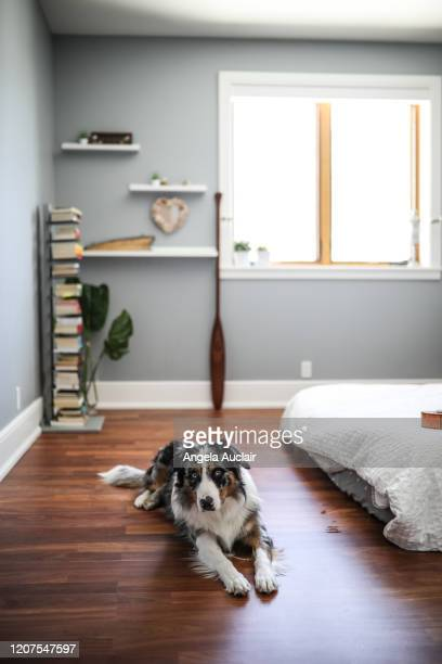 authentic teen bedroom with pet dog - angela auclair stock pictures, royalty-free photos & images