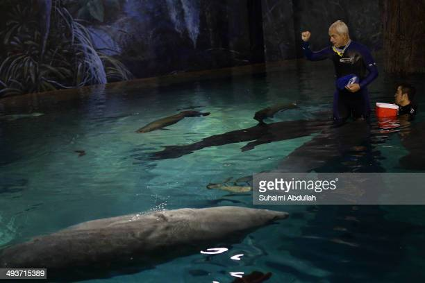 Author and television presenter of River Monsters series Jeremy Wade feeds the manatees and arapaimas during the Jeremy Wade's exclusive showcase at...