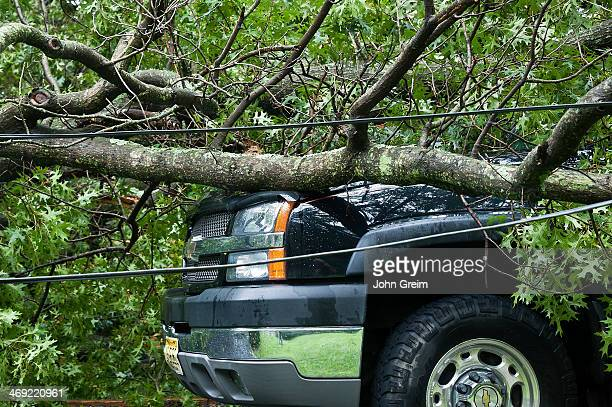 Auto damage caused by fallen tree in storm