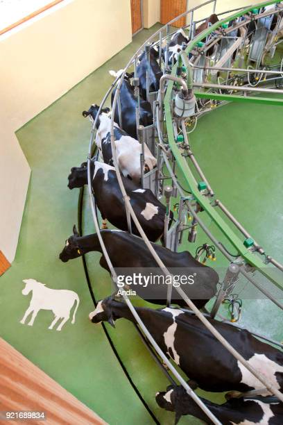 Automated milking room in a farm. Rotolactor, rotary platform.