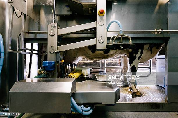 automated milking system - milk pack stock photos and pictures