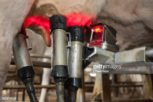 Automatic milking robot / mechanical milker