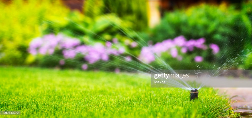 automatische Bewässerung Bewässerung des Rasens : Stock-Foto