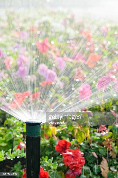 automatic sprinkler watering flowers - sprinkler system stock pictures, royalty-free photos & images