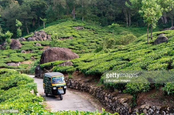 Autorickshaw drives through Pothamedu tea plantation Munnar Kerala India