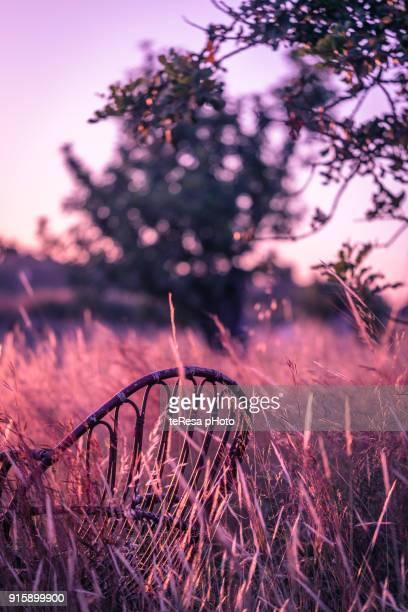 autum field ultra violet