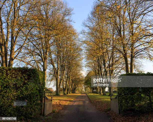 autum row of trees near hambleden, buckinghamshire - jim donahue stock pictures, royalty-free photos & images