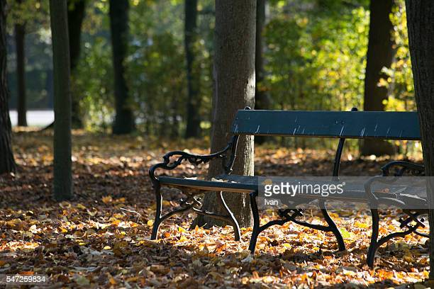 autumn alley lonely bench - grand duchess stock pictures, royalty-free photos & images