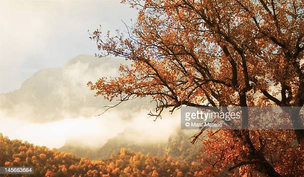 autumn and foggy weather - marc mateos fotografías e imágenes de stock