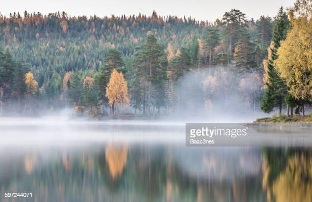 Autumn and morning mist