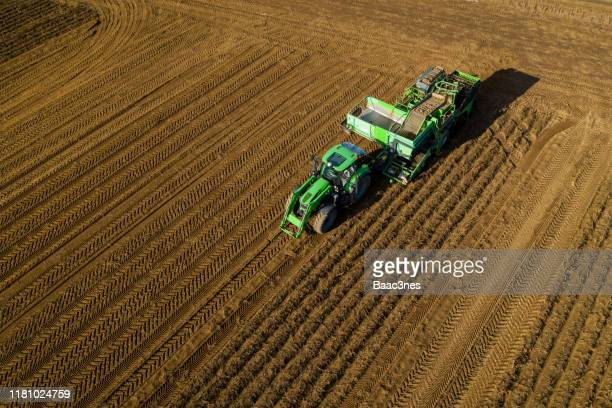 autumn and time to harvest potatoes - norway - potato harvest stock pictures, royalty-free photos & images