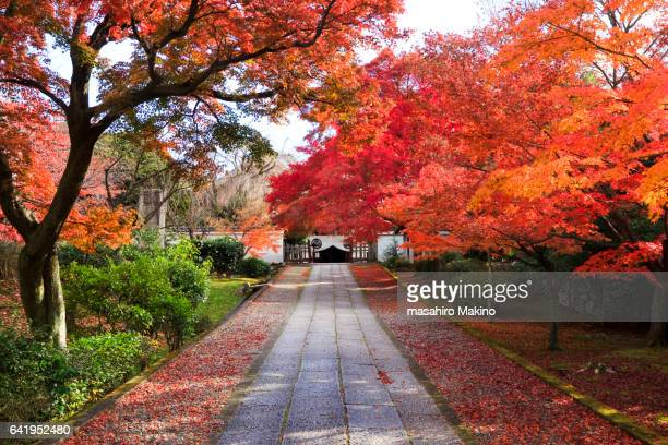 Autumn Approach to Yogen-in Temple