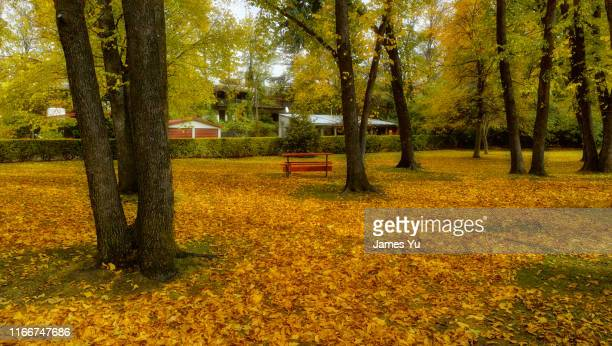 autumn arrowtown - arrowtown stock pictures, royalty-free photos & images