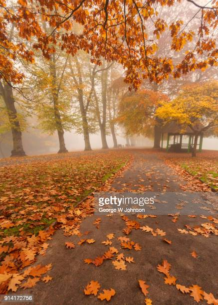 autumn at highgate iii - highgate stock pictures, royalty-free photos & images