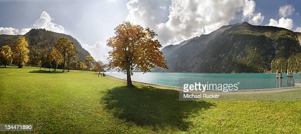 Autumn at Lake Achensee near Achen Church with a maple tree on a green meadow, backlighting, Achensee, Tyrol, Austria, Europe