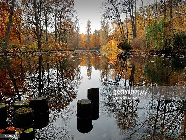 autumn at lake - bernd schunack photos et images de collection