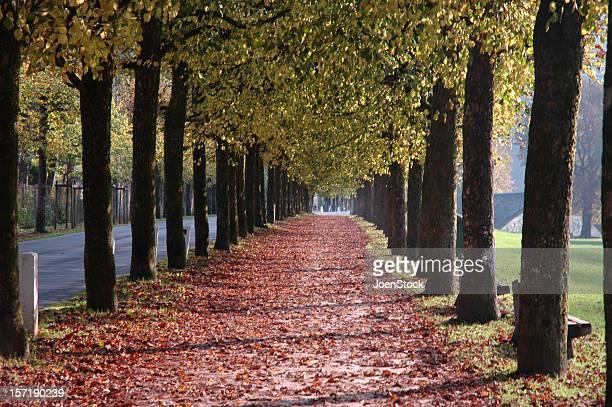 autumn avenue bouillon belgian ardennes belgium - ardennes department france stock photos and pictures