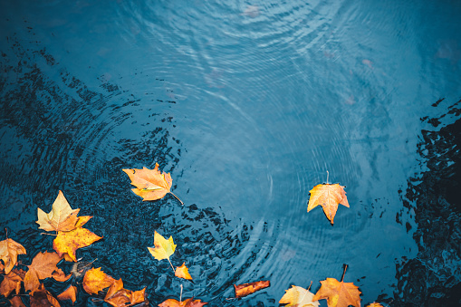 Autumn Background 1161394969