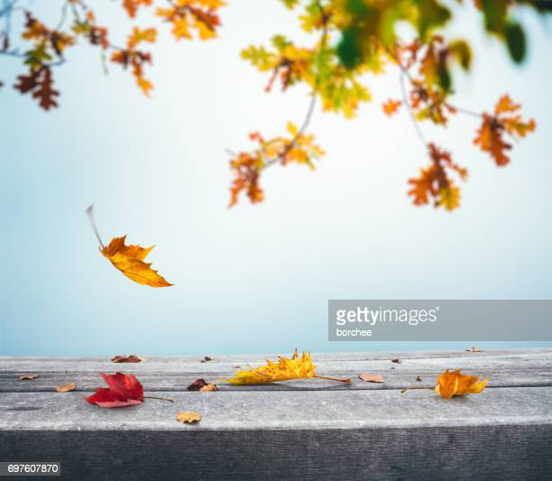 autumn background with falling leaves - autumn falls stock pictures, royalty-free photos & images