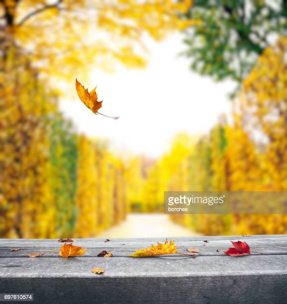autumn background with falling leaves - november background stock photos and pictures