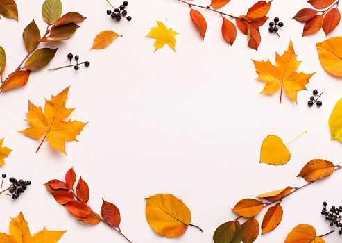 Autumn background with round frame with white blank space 1169954686