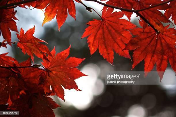 autumn backgrounds in japan - 八幡平市 ストックフォトと画像