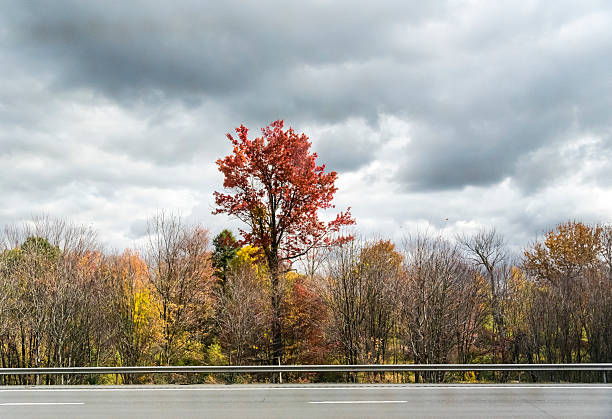 autumn backgrounds or nature wallpapers colorful tall tree