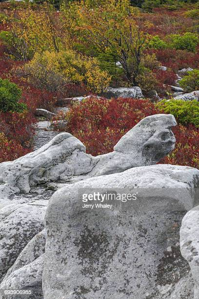 autumn, bear rocks preserve, dolly sods wilderness - monongahela national forest stock photos and pictures