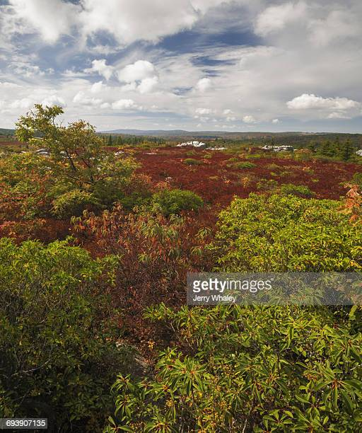 Autumn, Bear Rocks Preserve, Dolly Sods Wilderness